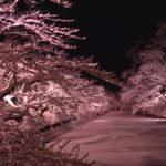 Googlemap・弘前公園(青森)冬桜ライトアップ
