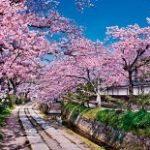 哲学の道・銀閣寺ライブカメラ(京都)で桜の開花情報