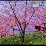 城山歴史公園桜まつり(河津桜)へのアクセス(Googlemap)とメジロ